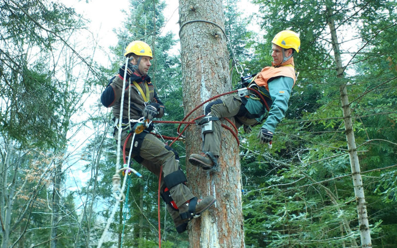 Guida e studente sull'albero