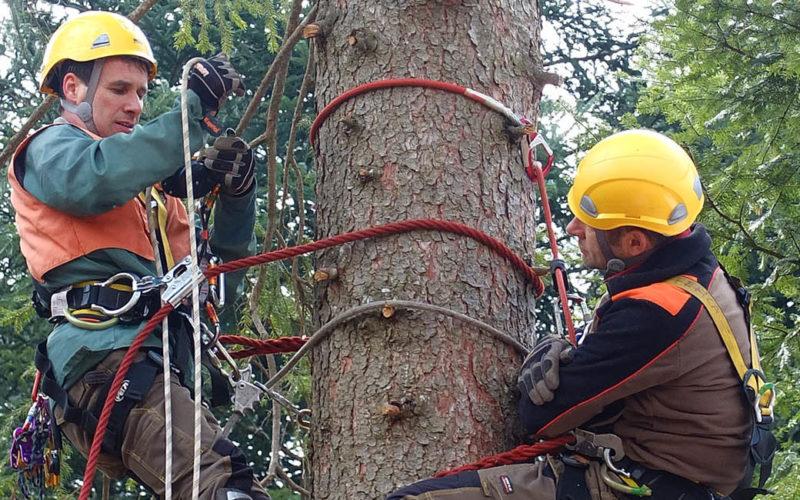corso tree climbing con guida alpina
